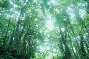 森のイメージ